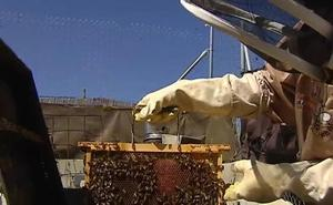 Dos años conviviendo con 80.000 abejas en la pared del dormitorio