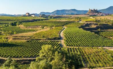 Thriller entre viñedos en la Rioja Alta