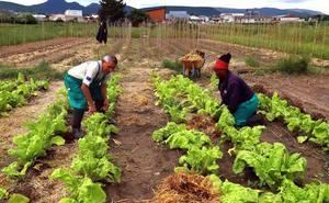Cáritas renuncia a impulsar una cooperativa de agroecología por falta de viabilidad