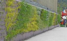 Berango estrena un muro vegetal que con 6.000 plantas