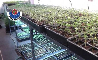 Así trataban de ocultar el cultivo de 5.000 plantas de marihuana en Barakaldo
