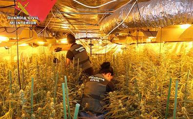 La Guardia Civil desmantela tres plantaciones de marihuana en Muxika, Gatika y Galdakao