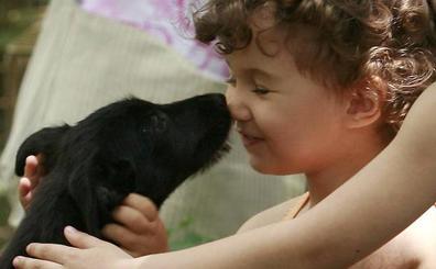 Getxo busca familias que adopten a siete perros abandonados