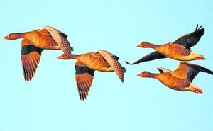 La 'biblia' de las aves, en Vitoria y en euskera