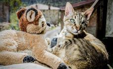 Animales que en Álava viven la vida 'color frambuesa'
