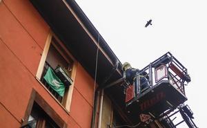 El rescate de un cuervo en Vitoria paso a paso