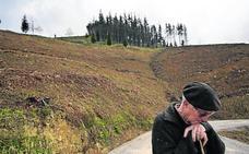 El Gobierno vasco subvencionará el cambio de pinos por robles en Urdaibai