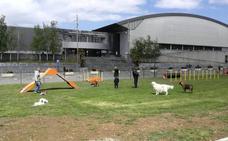 La Policía Local de Barakaldo controlará que los perros tengan el microchip identificativo
