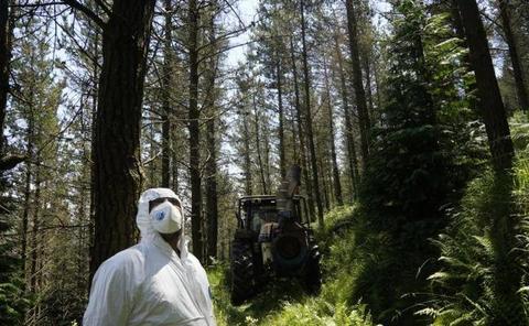 232 forestalistas de Bizkaia atacan a la enfermedad de los pinos con tratamientos terrestres