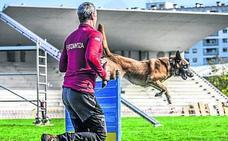 El perro policía que atacó a su guía