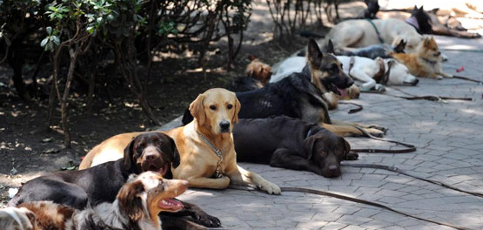 Más perros que niños: el efecto colateral de la sangría demográfica