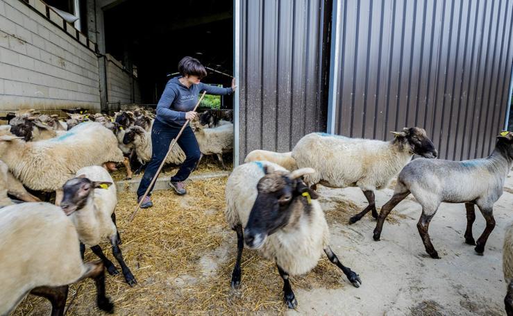 El día a día de Maider junto a sus ovejas