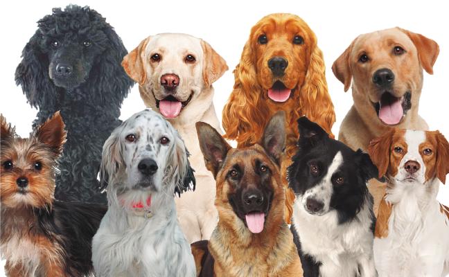 Más perros que niños en Vitoria