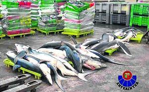 Condenados el patrón y el armador de un barco de Ondarroa por pesca ilegal de marrajos