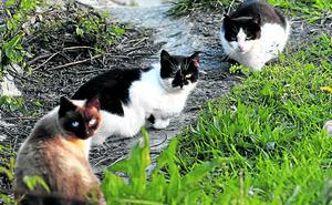 Leioa alerta del intento de envenenar gatos callejeros