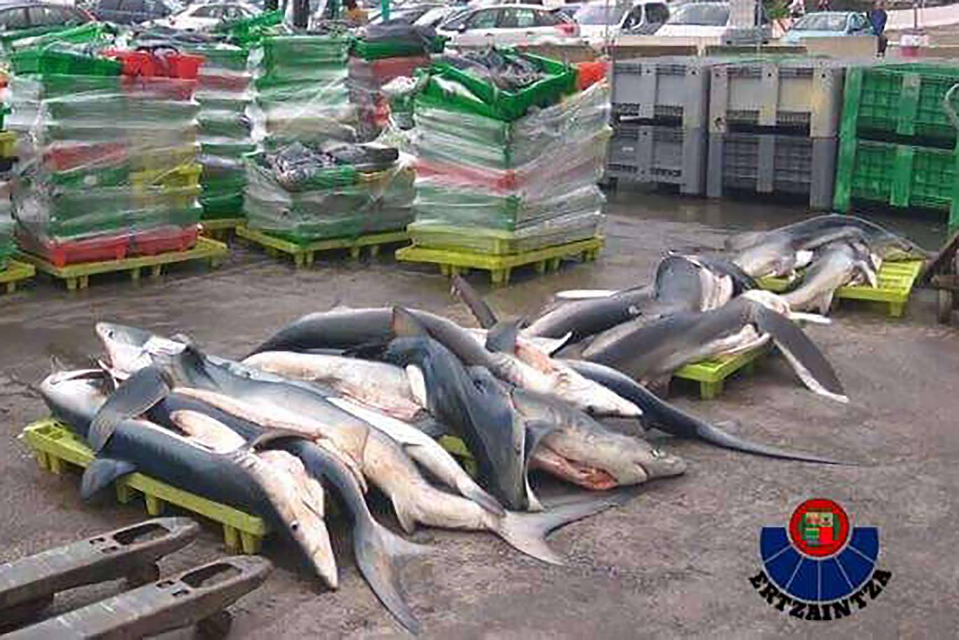Eguzki de Ondarroa censura que delitos ecológicos como la pesca ilegal de marrajo 'salen baratos'
