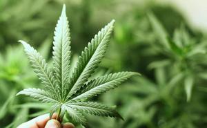Detenido un vizcaíno en Cantabria con más de 14 kilos de marihuana