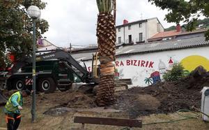 Trasplantan cuatro palmeras en el interior de Zorrozaurre
