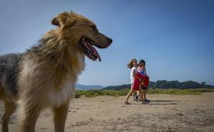 Seis playas para ir con tu perro sin miedo a que te multen