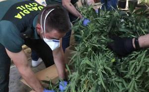 Dos vizcaínos implicados en el mayor laboratorio de marihuana de La Rioja