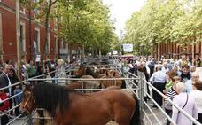 Más de 50 productores alaveses participarán en la feria agrícola y ganadera de Santiago