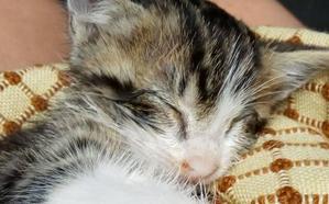 Denuncian la muerte de diez de gatos en Basauri por la paralización del CES