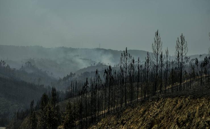 Más de 1.000 bomberos luchan contra el fuego en Portugal