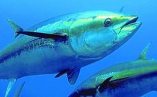 «Bermeo ha sido un semillero de grandes patrones de pesca de atún»