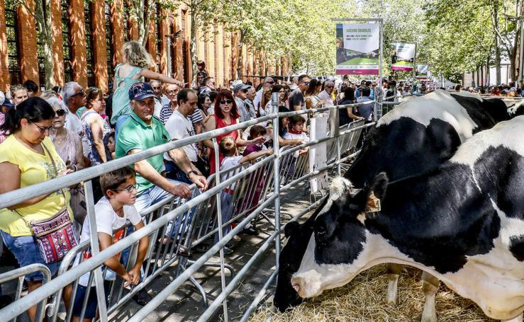 La feria agrícola de Santiago, en imágenes