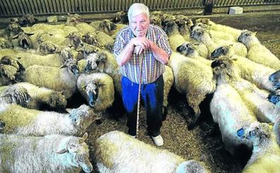 Las ovejas 'latxa' de Crispín o cómo resistir a la llegada de razas foráneas más lecheras