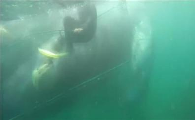 Espectacular rescate de una ballena atrapada en las redes de unos pescadores en Perú