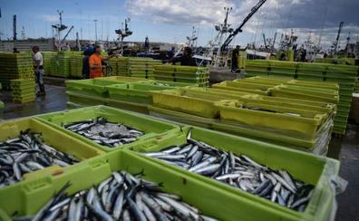 Los bancos de anchoas consiguen el segundo resultado histórico en el Golfo de Bizkaia