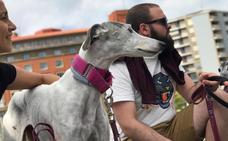 ¿Tienes 'Galguitis aguda'? Las divertidas prendas 'made in Bilbao' para ayudar a los galgos