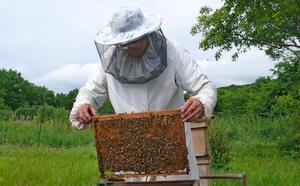 Refuerzan las ayudas a los apicultores para compensar el avance de la avispa asiática