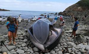 La nueva atracción de Asturias: la ballena varada de Tapia