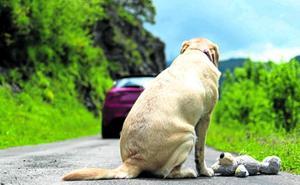Cuando el dueño sale malo: la mayor pesadilla de las mascotas