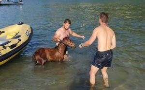 El exitoso rescate de un caballo que saltó en Saltacaballo