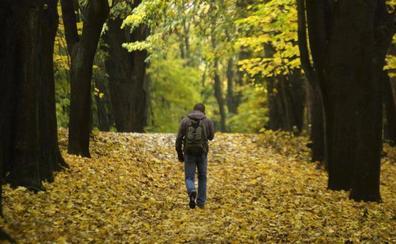 Caminante, sí hay camino entre libros