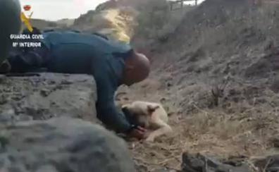 Encuentran exhausto y deshidratado a un perro durante la evacuación por el incendio de Gran Canaria