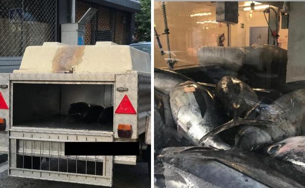 Decomisados 120 kilos de bonito en Vitoria transportados en un remolque para perros