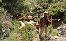 Portugaleko Gobernuak ahuntzak erabiltzen ditu suteak ekiditeko helburuarekin