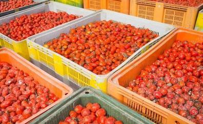 Los 145.000 kilos de 'munición' de La Tomatina salen hacia Buñol
