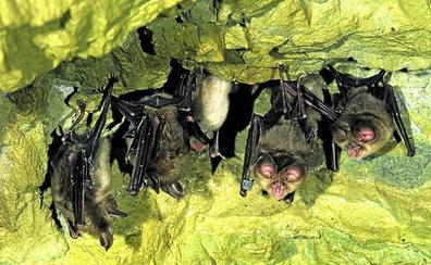 Los murciélagos, reyes de la noche en Ataria