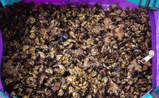 La Ertzaintza requisa 48 kilos de ostras y percebes a cuatro furtivos en Bermeo y Sukarrieta