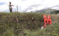 Un joven sobrevive al ataque de 15 avispas asiáticas en Cantabria