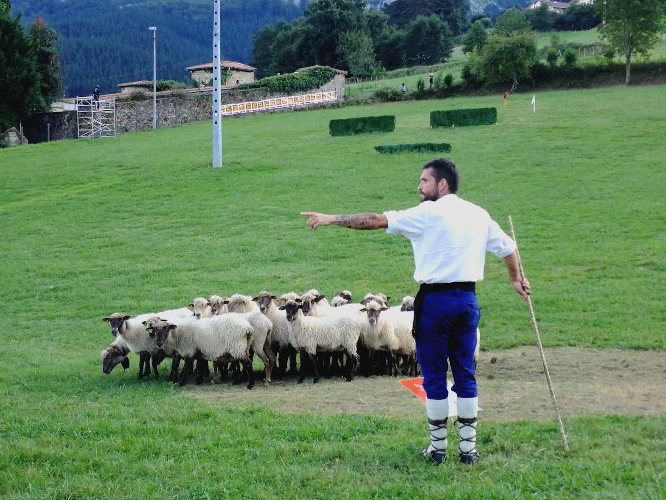 Gerediaga se despide del campeonato de perros pastor vasco el sábado en Axpe