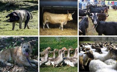 Estos son los animales con 'apellidos' vascos que hay que cuidar