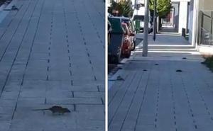 Vecinos de Salburua vuelven a denunciar la presencia de ratas en el barrio