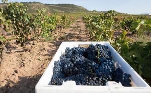 Rioja Alavesa, diferenciarse para sumar