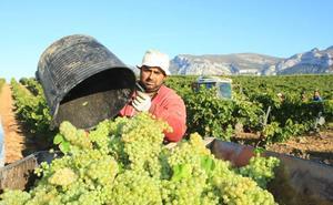 La vendimia se ralentiza tras unas lluvias que aumentan el riesgo de daños en la uva